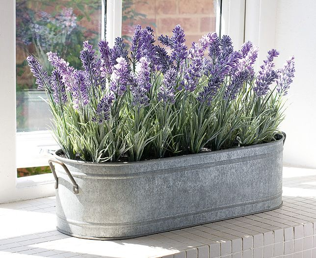 Hoa trồng ban công có mùi thơm dịu nhẹ, đẹp mà dễ trồng 2