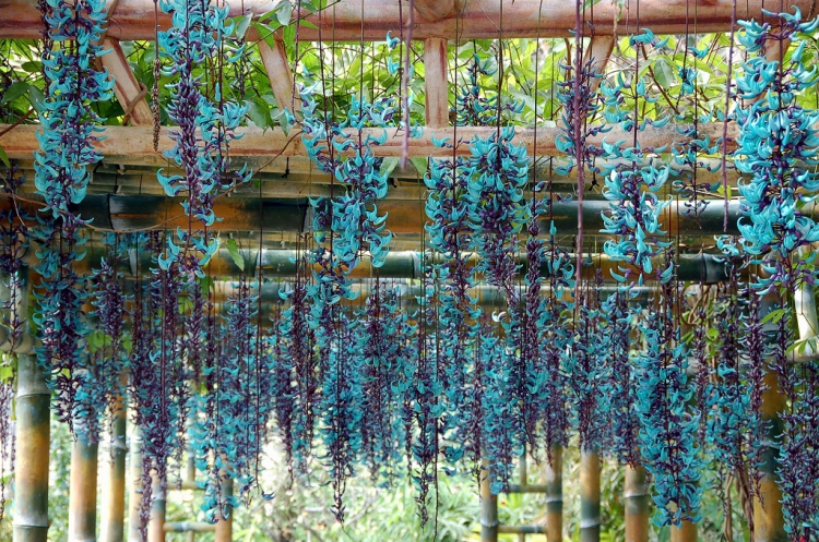 Một số loại hoa trồng ban công chịu nắng dễ trồng 4