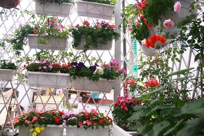 Một số loại hoa trồng ban công chịu nắng dễ trồng 1