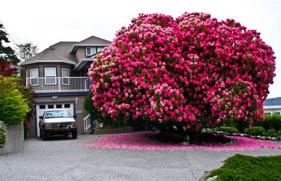 Nhà hướng Tây Bắc nên trồng cây gì? Lưu ý khi trồng cây trước nhà 1